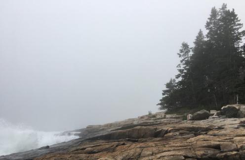 Schoodic shore