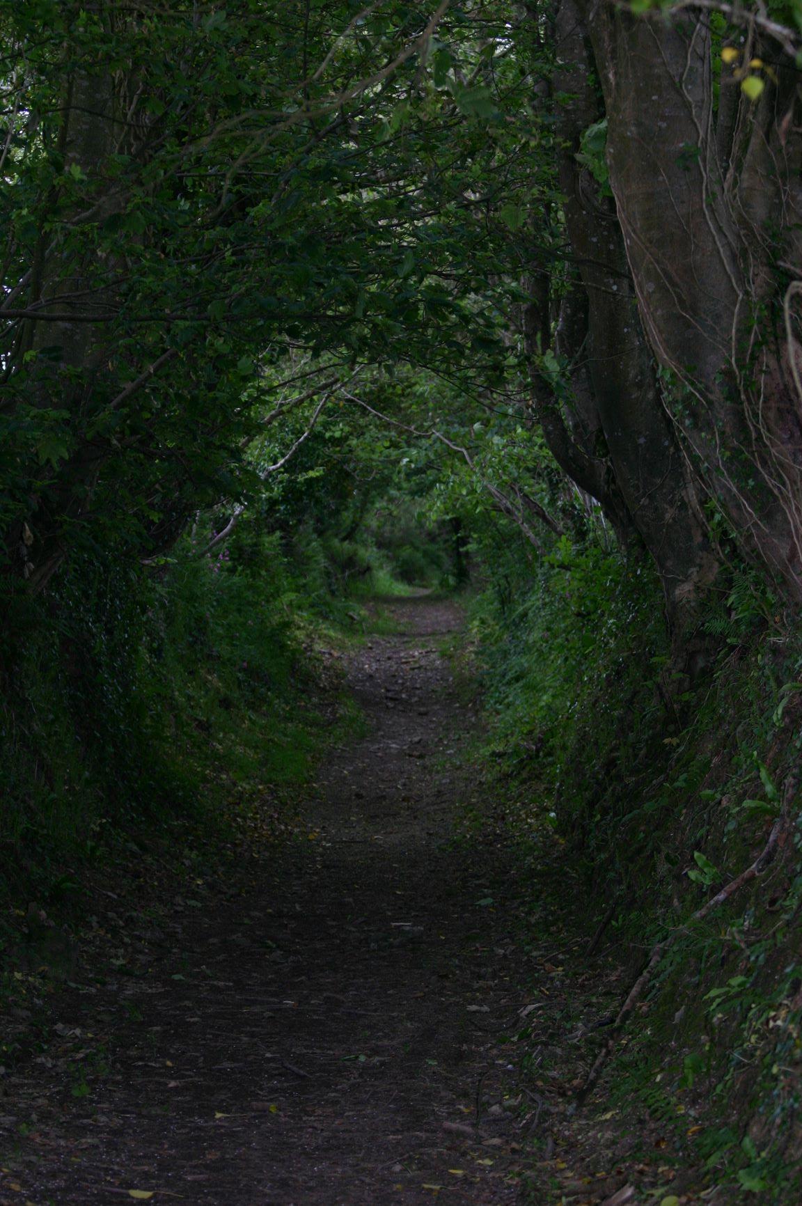 Fae path