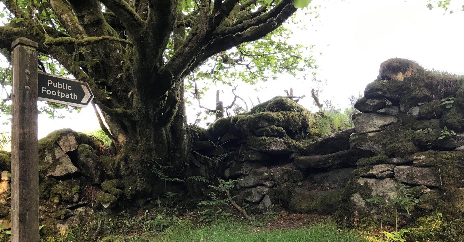 Moor path